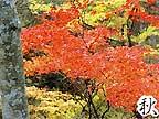 秋 天皇の間記念公園